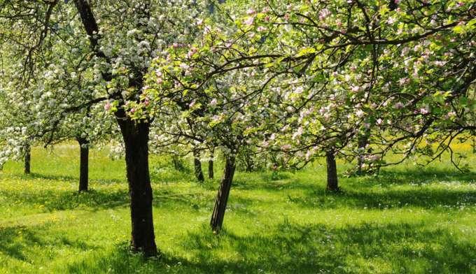 Obstbaume Richtig Schneiden Seminar In Der Garten Werkstatt