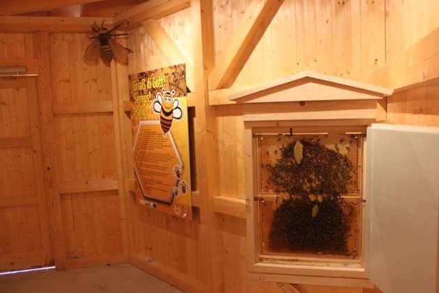 wanderer machen sich auf die spuren der geheimnisvollen honigbiene. Black Bedroom Furniture Sets. Home Design Ideas