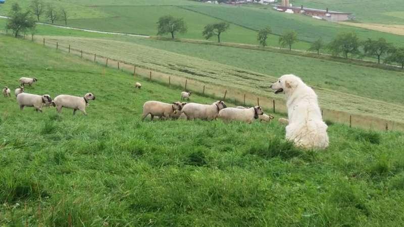 Agrarreise Schweiz mit Landesrat Max Hiegelsberger - Bild 44