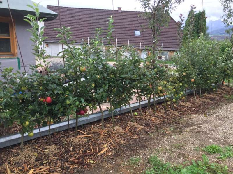 """Garten-Ideen: Von der """"Apfelhecke"""" bis zur Saatgut-Vermehrung"""