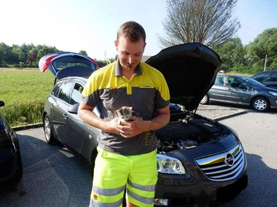 Kätzchen aus Motorraum gerettet