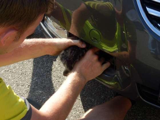ÖAMTC-Techniker rettet Kätzchen aus misslicher Lage