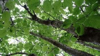 Baumschätze & Waldköstlichkeiten
