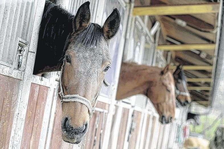 Pferdesportverband