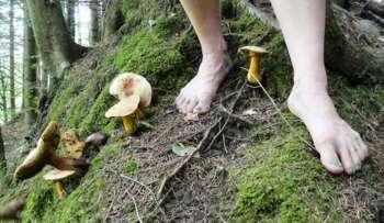Der magische Waldspaziergang