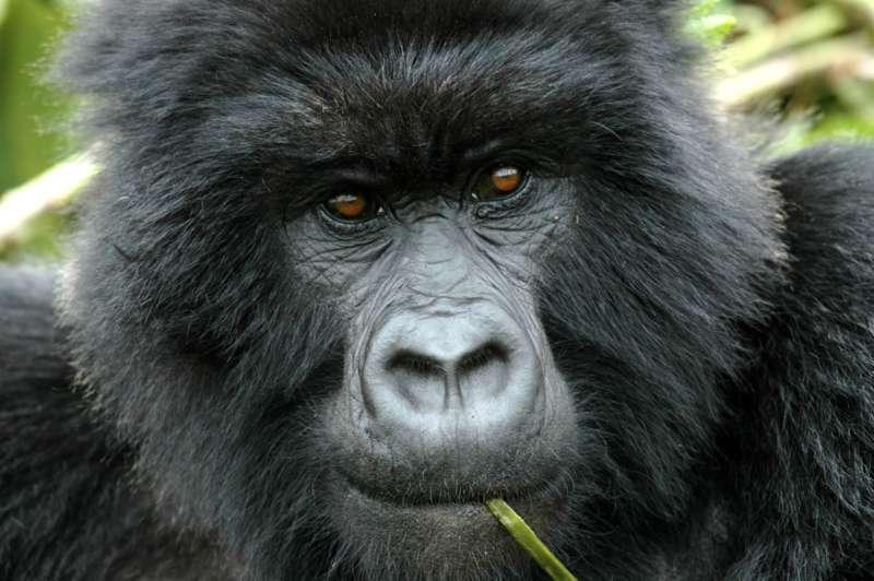 Multimediashow OSTAFRIKA (Kenia, Uganda, Tansania, Sansibar) - Bild 1426452711