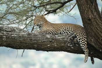 OSTAFRIKA - Kenia, Tansania, Sansibar, Uganda
