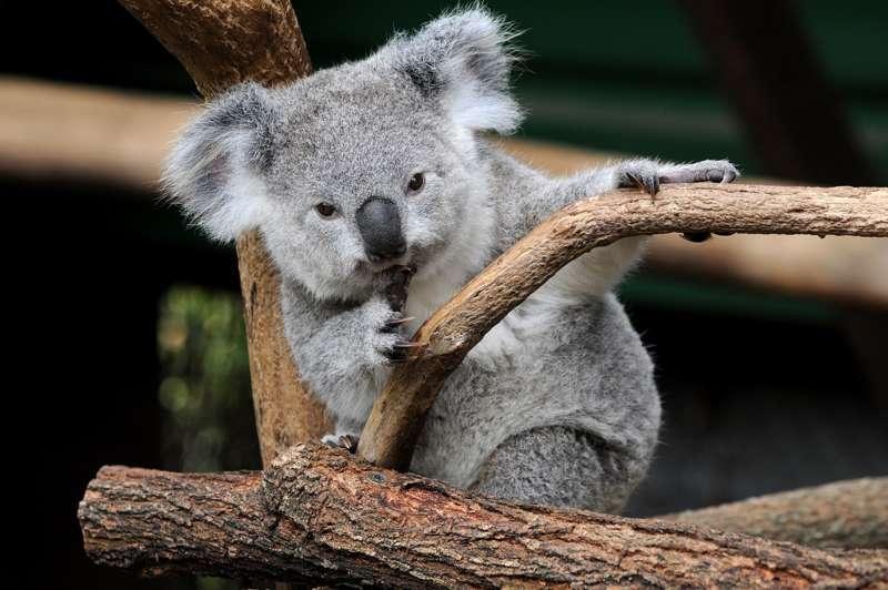 AUSTRALIEN - Das große Abenteuer - Bild 1296405504