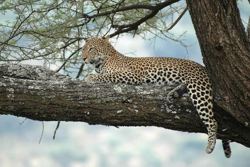 OSTAFRIKA - Kenia, Tansania, Sansibar, Uganda - Bild 1425837493