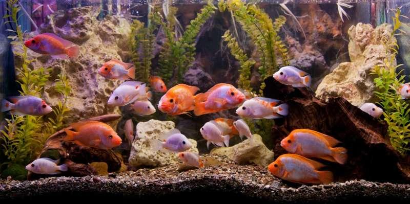 25+ Fische die wenig platz brauchen 2021 ideen