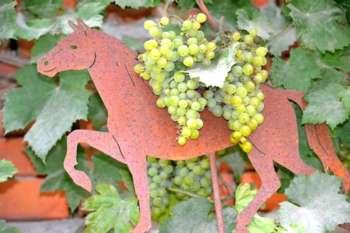 Herbstfest des URV-Ungenach