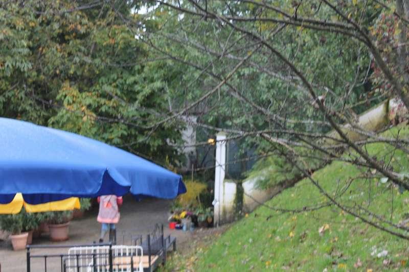 Tag der offenen Tür im Tierparadies Schabenreith in Steinbach am Ziehberg - Bild 21