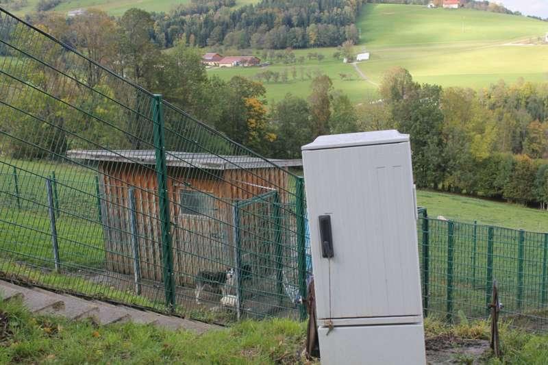Tag der offenen Tür im Tierparadies Schabenreith in Steinbach am Ziehberg - Bild 37