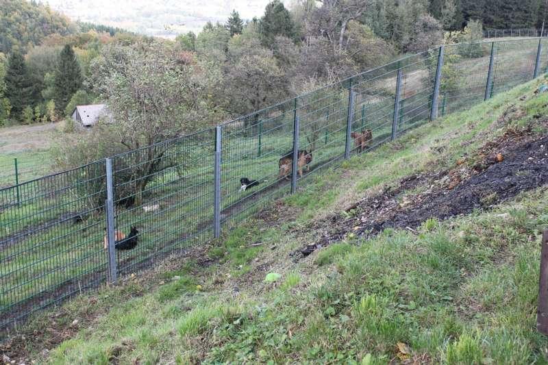 Tag der offenen Tür im Tierparadies Schabenreith in Steinbach am Ziehberg - Bild 48
