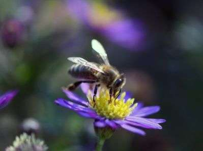 Ferienprogramm in der Grüne Erde-Welt: Naturschauspiel on Tour - Mission Wildbiene - Bild 1