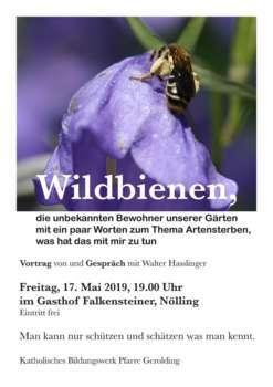 Wildbienen, die unbekannten Bewohner unserer Gärten