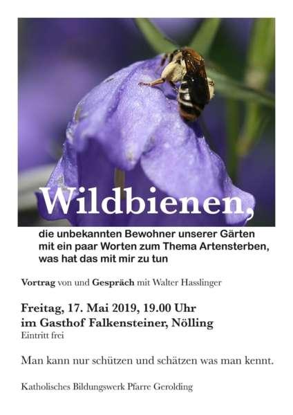 Wildbienen, die unbekannten Bewohner unserer Gärten - Bild 1