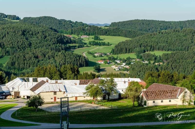 Hagelschäden in Reichenau und Haibach - Bild 6