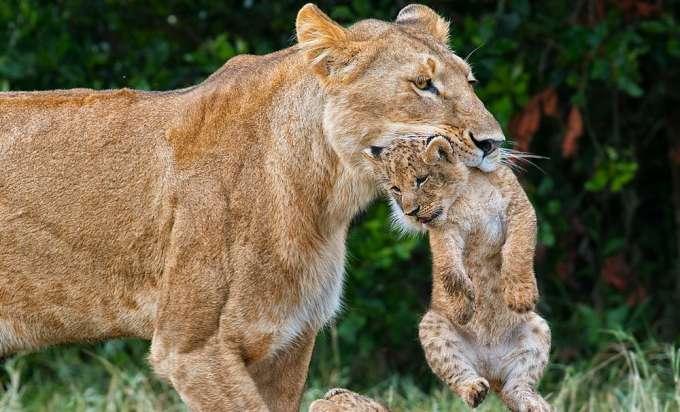 Buchvorstellung Afrika Tag Im Zoo Linz