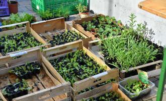 Pflanzenmarkt in Oberneukirchen