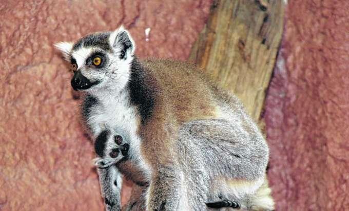 Besucherrekord Im Zoo Linz
