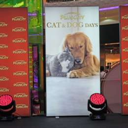 Dog Days in der Plus City 2019