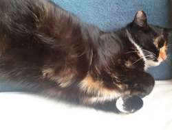 Katze vermisst!!!