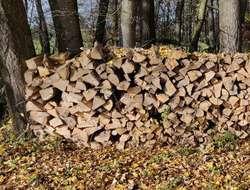 Hartes Brennholz (Esche)