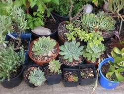 Kübelpflanzen - Jungpflanzen