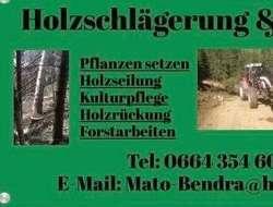 Holzschlägerung & Bringung