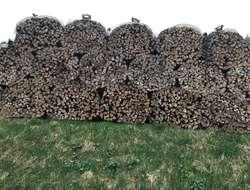 Trockenes Buchenholz aus der Region