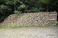 Brennholz, Hartholz, Buchenholz, nähe Vöcklabruck