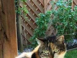 Katze gesucht