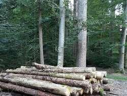 Brennholzstämme