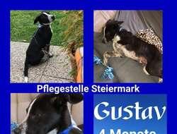 Gustav