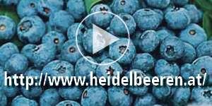 S21 Heidelbeerland Sturm