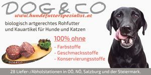 Dog & Co Rainer GmbH
